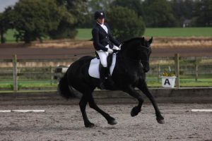 Medusa the Friesian competing at dressage in her Cadence