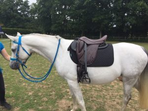 The Pegasus super Lightweight, Ideal for riders who don't use weights or smaller horses.